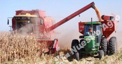 El maíz de primera tuvo grandes resultados en el centro norte santafesino