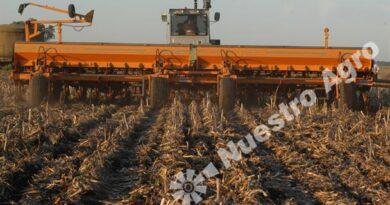 La incertidumbre y el clima podrían generar una caída del área sembrada con trigo