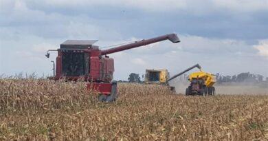 El maíz logró recuperarse y se encamina a la segunda mejor campaña de la historia