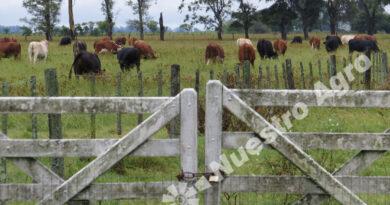 Por la brecha cambiaria y el proyecto de impuesto a la riqueza, cayó la actividad en el mercado inmobiliario rural