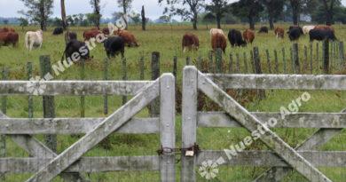 En junio se renovaron las ilusiones del mercado inmobiliario rural
