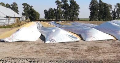 Sin tregua: se multiplican los ataques al campo y Santa Fe es uno de los epicentros del vandalismo