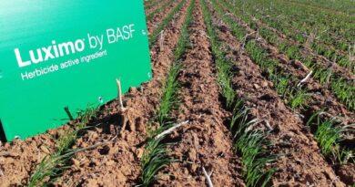Crean un herbicida con un nuevo modo de acción para combatir las malezas