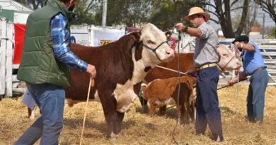Con gran éxito y adaptándose al contexto, la Sociedad Rural de San Justo llevó a cabo su tradicional muestra