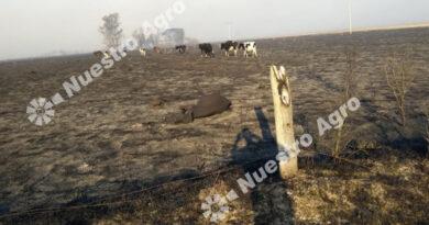 Impactante incendio en la región consumió unas 1.000 hectáreas y provocó pérdidas importantes