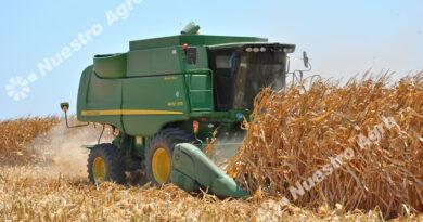 Las lluvias detuvieron la caída del maíz y desde la BCR proyectan una campaña de 46 millones de toneladas