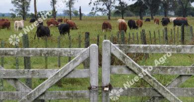 Desde CAIR confirmaron signos de recuperación para el mercado inmobiliario rural