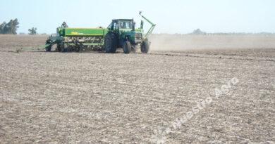 Pronostican una mayor superficie sembrada con soja en el centro norte santafesino