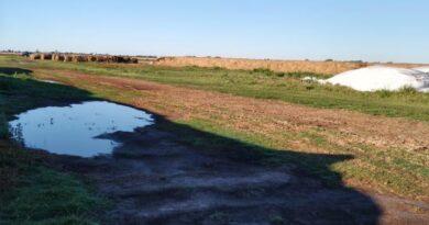 Vandalismo rural: productor tambero de Josefina sufrió la rotura de diez silobolsas y estiman pérdidas millonarias