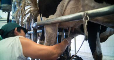 Pronostican un crecimiento superior al 6% para la producción de leche en 2020