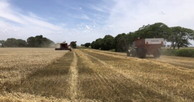 Mientras la cosecha avanza, las proyecciones para el trigo muestran números impactantes en el centro norte santafesino