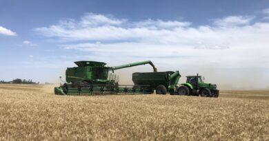 A medida que avanza la cosecha de trigo se advierte el impacto de la sequía en el centro norte santafesino