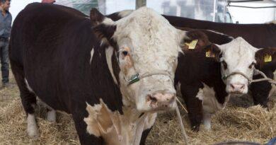 Argentina abrió el mercado de Chile para la exportación de genética bovina