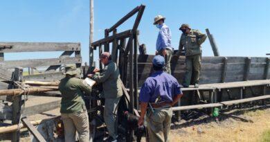 """Inseguridad rural: """"Los Pumas"""" recuperaron 138 bovinos que habían sido robados de una firma ganadera"""
