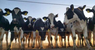 """""""CheqTambo"""": la aplicación que evalúa las buenas prácticas en establecimientos lecheros"""