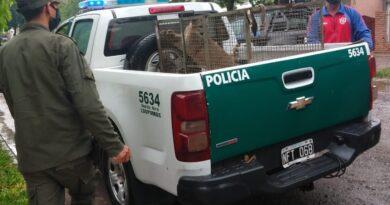 Los Pumas imputaron a más de 800 personas por diferentes delitos rurales
