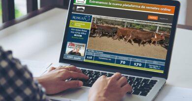 Una foto del momento: en ROSGAN, la vaca y los vientres tuvieron difícil colocación